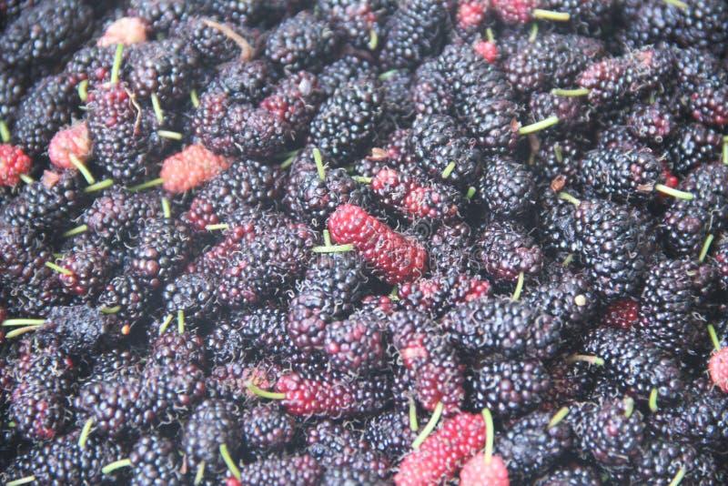 Sao delizioso Paulo Brazil di agricoltura del succo di Blackberry della frutta della vitamina rossa dell'alimento fotografie stock libere da diritti