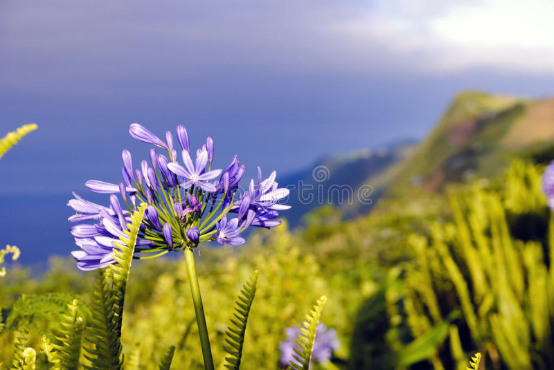 Sao Jorge, Azores royalty free stock images