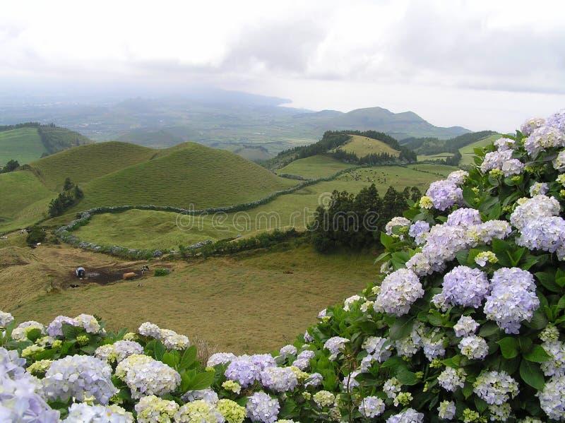 Sao Miguel, Azores obrazy stock