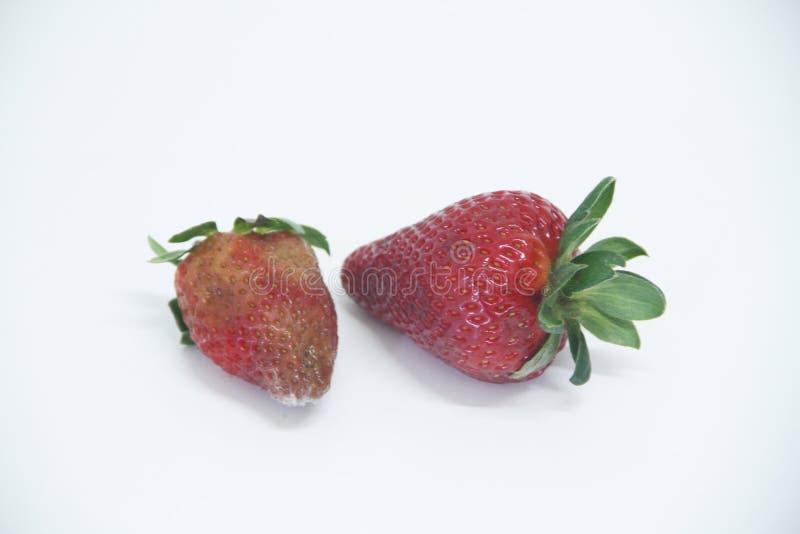 Sao saludable delicioso aislado agricultura Paulo Brazil de la fruta del molde de la comida de la fresa fotografía de archivo
