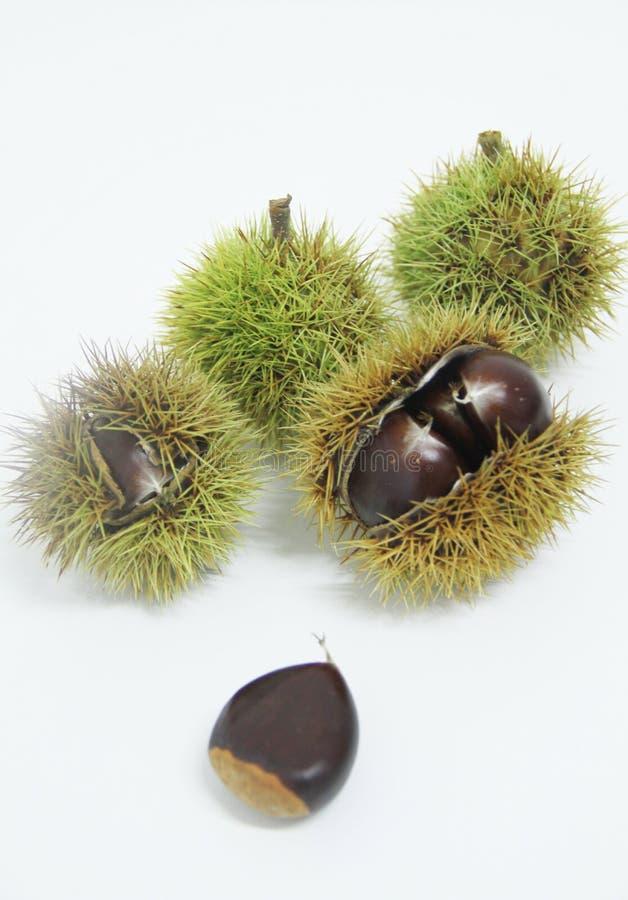 Sao saludable delicioso aislado castaña-Portuguesa Paulo Brazil del fondo de la fruta blanca de la comida imagen de archivo libre de regalías