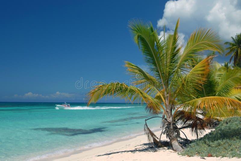 Saona, Insel in der Dominikanischen Republik ist eine Insel lizenzfreie stockfotografie