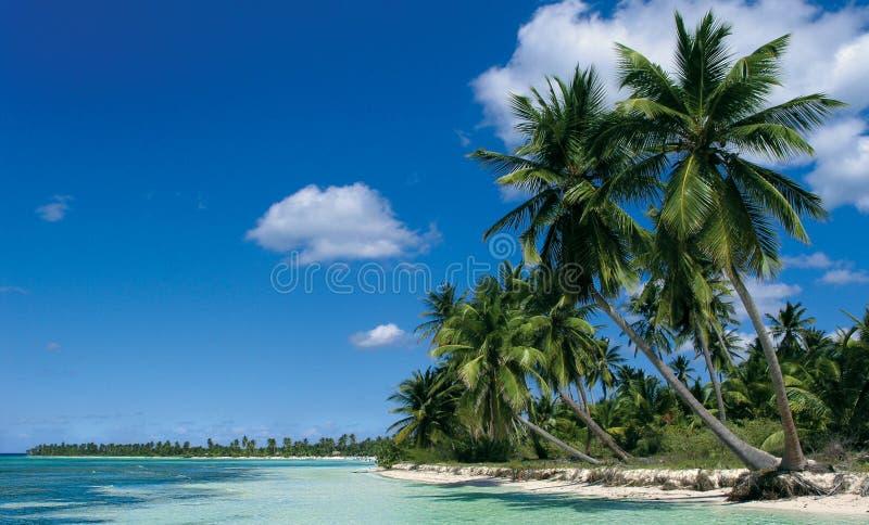 Saona island. Beach on Saona island royalty free stock photography
