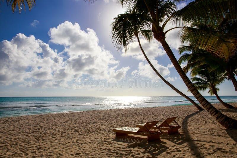Saona island beach. Beautiful caribbean beach on Saona island, Dominican Republic royalty free stock photography