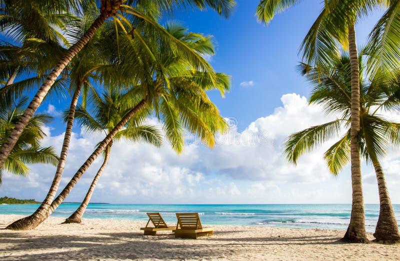 Saona island beach. Beautiful caribbean beach on Saona island, Dominican Republic stock photo