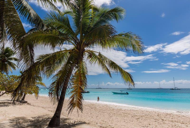 Saona island. At the beach on the Saona Island in Dominican Republic stock photos