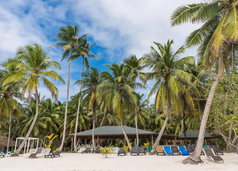 Saona island. At the beach on the Saona island in Dominican Republic stock images