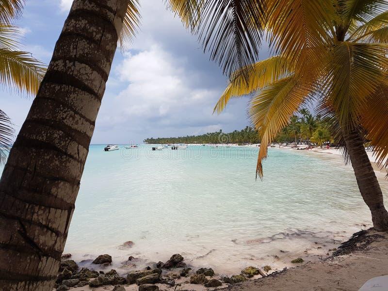 Saona island beach in dominican republic. Beach of saona island in dominican republic and white sand royalty free stock images