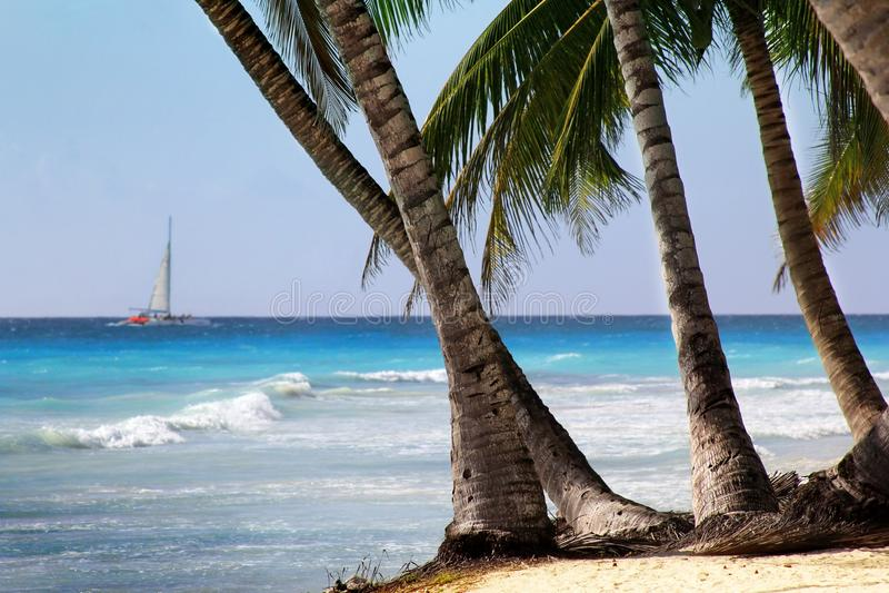 Saona island beach. Dominican Republic stock images