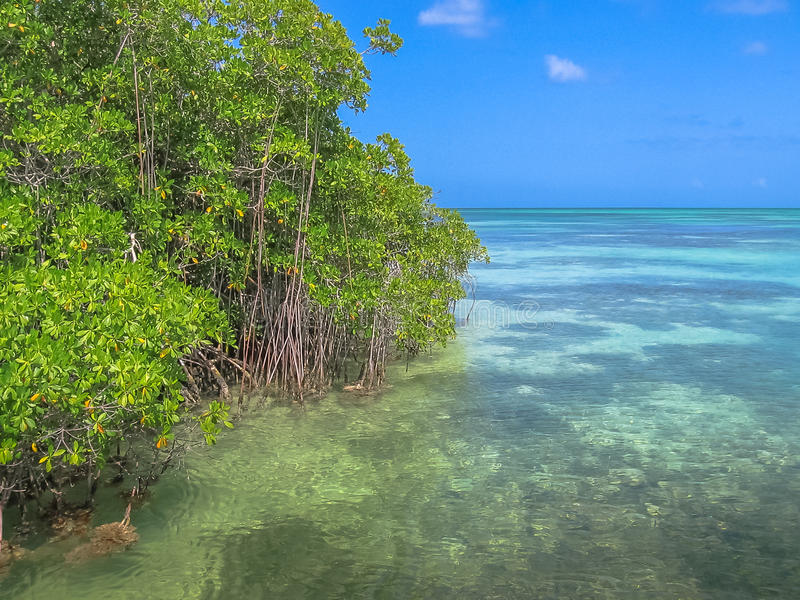 Saona Island Mangrove. The mangrove of Isla Saona in Parque Nacional del Este, East National Park, Dominican Republic. Saona island is one of the most popular stock images