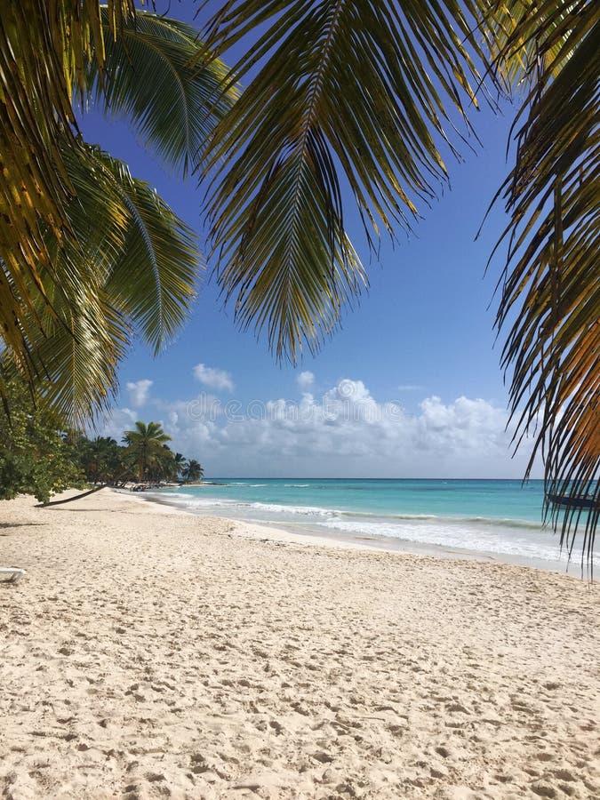 Saona island. On Saona island in the Dominican Republic. Of the Caribbean sea royalty free stock image