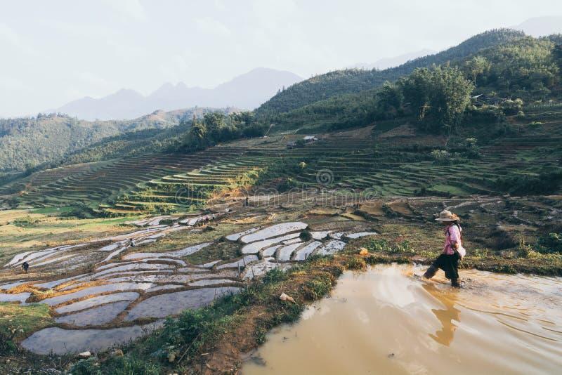 Sapa, Βιετνάμ - το Μάιο του 2019: Η γυναίκα Hmong στο παραδοσιακό φόρεμα περπατά στα πεζούλια ρυζιού στη λαοτιανή επαρχία CAI στοκ φωτογραφία με δικαίωμα ελεύθερης χρήσης