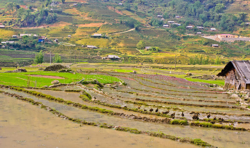Sapa hill tribe view. Landscape of rice crops in Sapa, Vietnam royalty free stock images