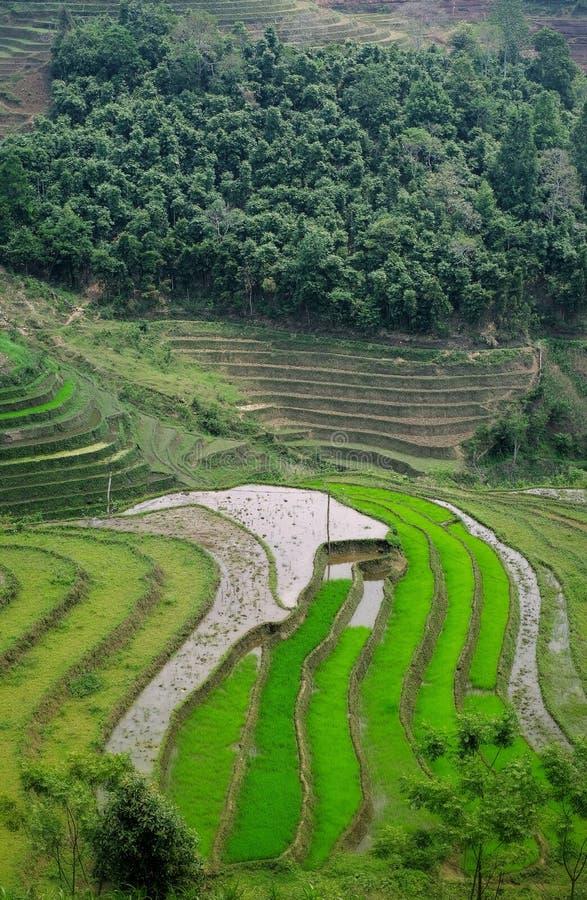 Sapa, Lao Cai, Vietnam royalty-vrije stock afbeeldingen