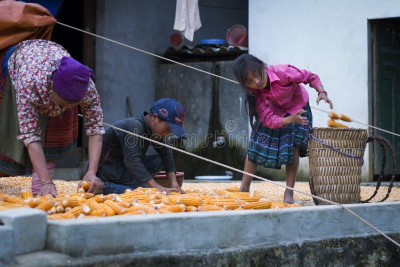Sapa, Lao Cai, Vietnam - 08 16 2014: Vietnamese Hmong-vrouwenlandbouwer met haar dochter die met graan in een dorp van Sapa, Laos stock foto