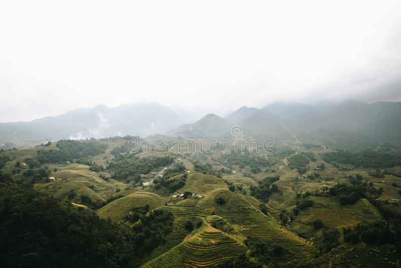 Sapa risberg i Vietnam royaltyfria foton