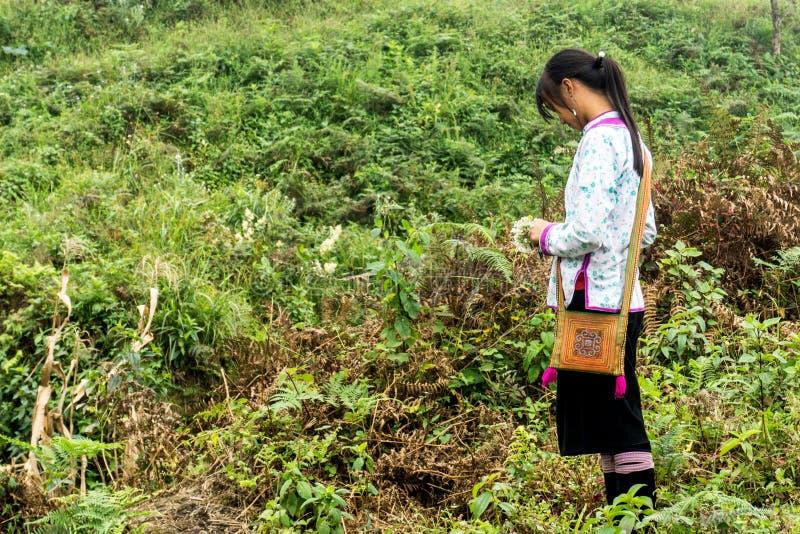 Sapa, Vietnam stock fotografie