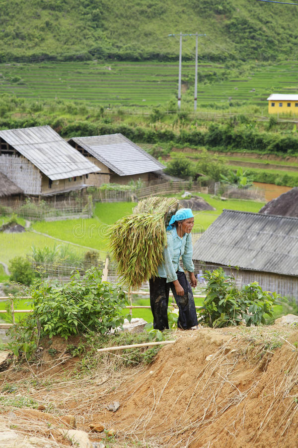 Sapa, Vietnam. JULY 7: A woman of the Black H'Mong Ehtnic Minority working the hillside fields in  on July 7, 2007. H'mong are the 8th largest ethnic minority royalty free stock photography