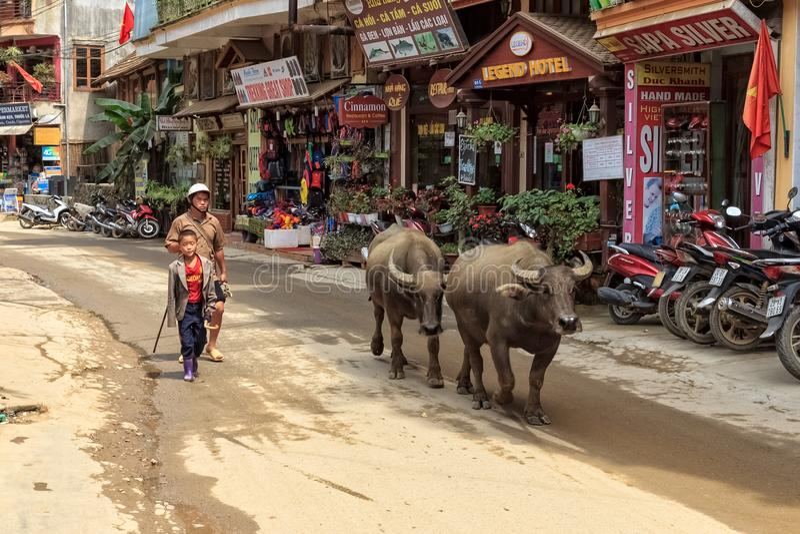 SAPA, VIETNAM: Niet geïdentificeerde lokale mensengangen met zijn waterbuffel stock fotografie