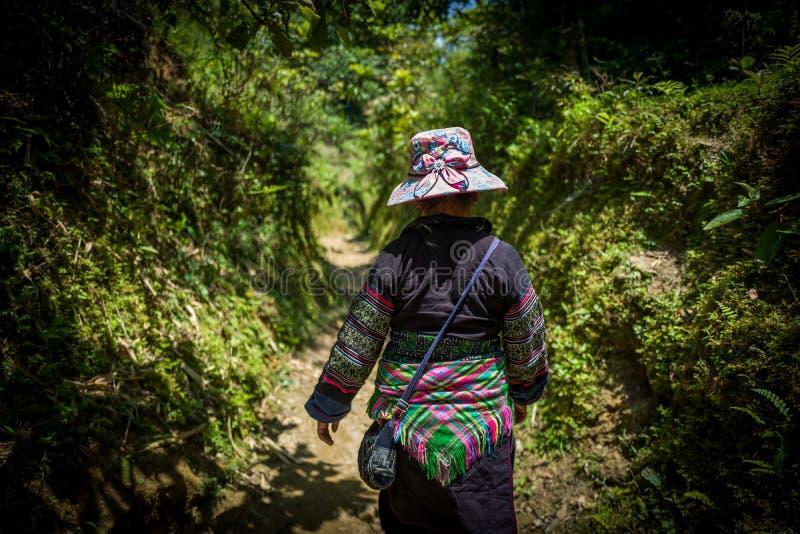 Sapa, Vietname - 23 de abril de 2018: O guia fêmea local anda na natureza bonita dos termas, Vietname foto de stock