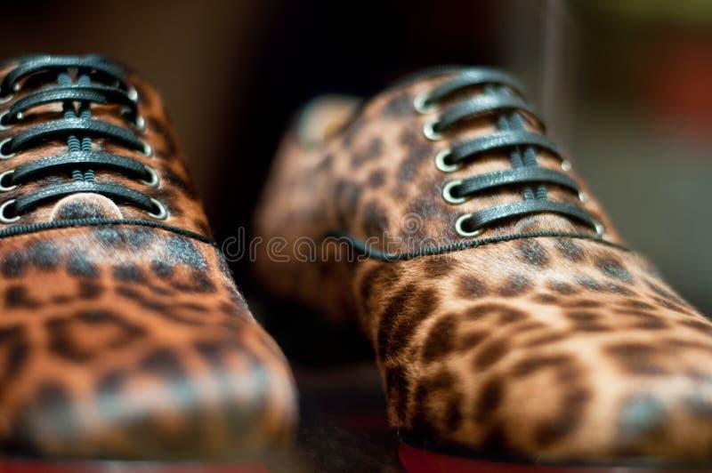Sapata da cópia do leopardo imagem de stock royalty free