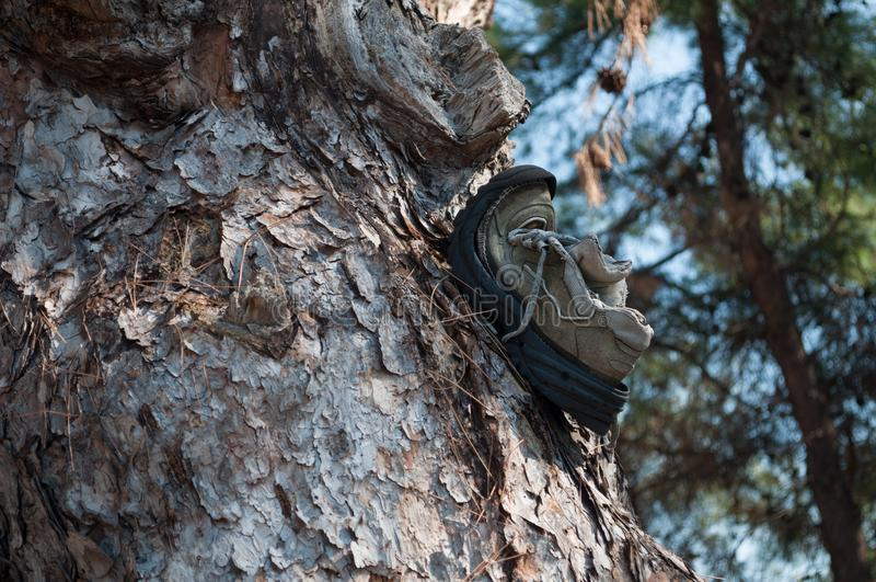 Sapata quebrada abandonada pregada em um tronco de árvore foto de stock