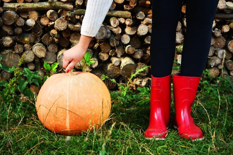 Sapatas da chuva da abóbora de outono e de madeira vermelhos com fundo dos leavs imagem de stock