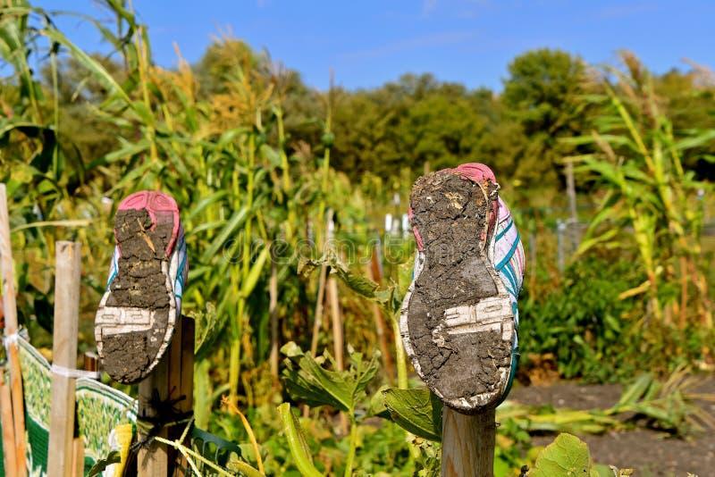 Sapatas enlameadas em um jardim imagens de stock royalty free