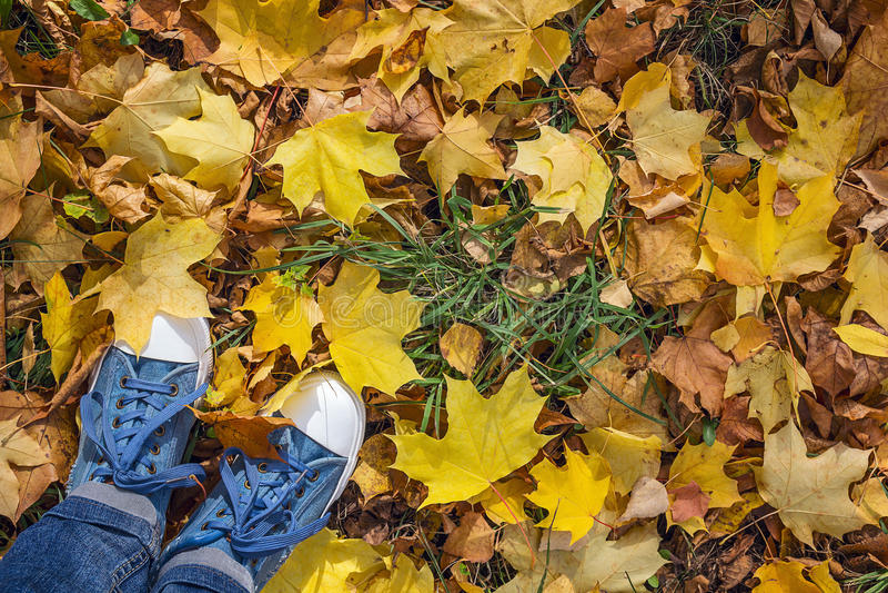 Sapatilhas da sarja de Nimes com as folhas de bordo caídas amarelas Vista superior com co imagens de stock royalty free