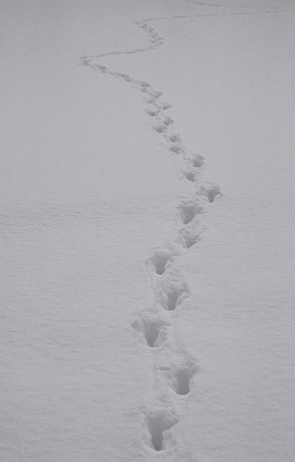 Sapere dove state andando? immagine stock