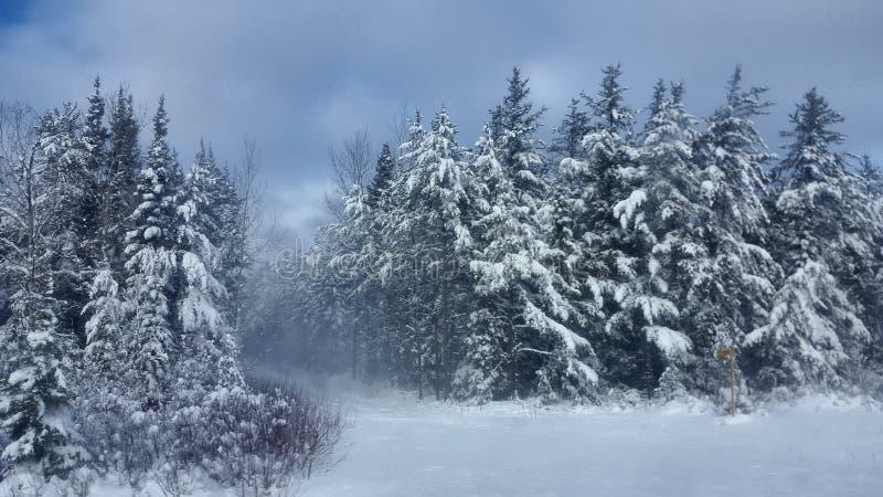 Sapin de neige de route d'hiver, Canada de Thunder Bay photos stock