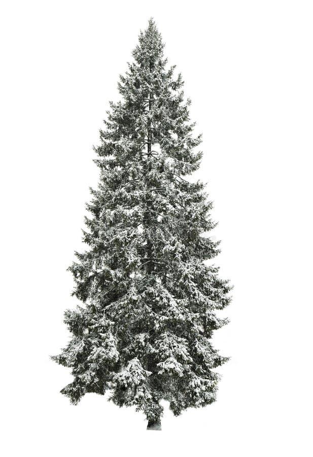Sapin en hiver photos stock