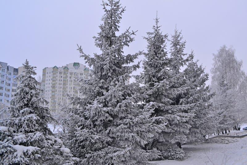 Sapin vert dans la ville givrée Paysage de pays Carte postale de l'hiver Temps froid d'hiver Arbre de pin photos libres de droits