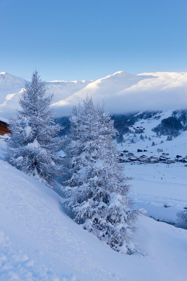 Download Sapins Dans L'horaire D'hiver Dans Les Alpes Image stock - Image du loisirs, lumineux: 45354833