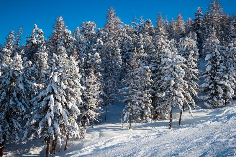 Download Sapins Dans L'horaire D'hiver Dans Les Alpes Image stock - Image du montagne, ressource: 45354983