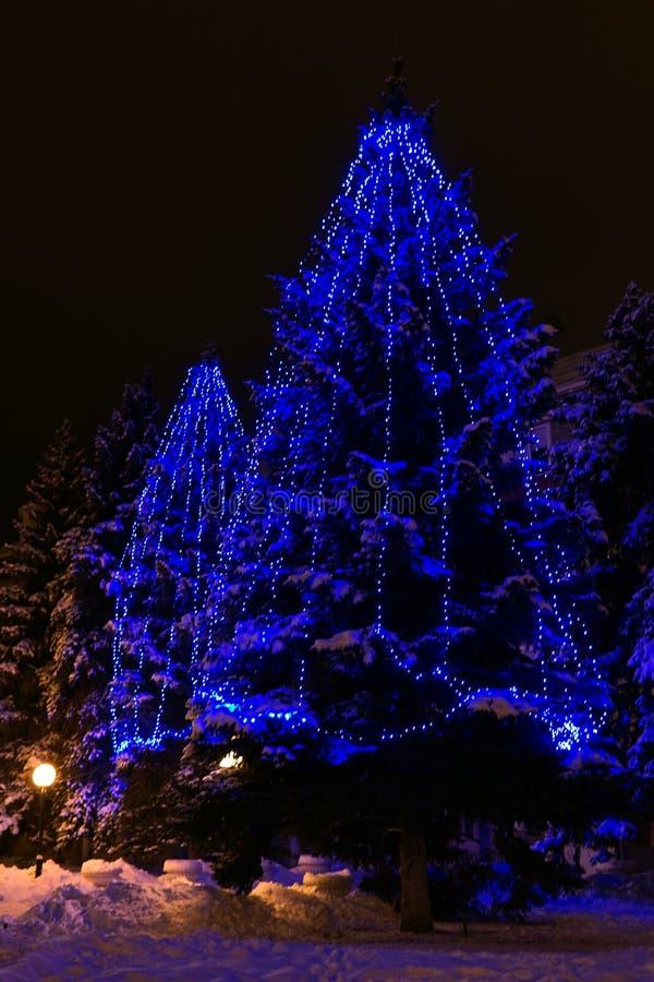 Sapins dans la rue dans la nuit d'hiver avec des lumières de Noël photographie stock libre de droits