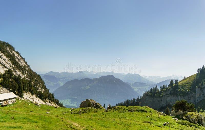 Sapins, pré et montagnes verts près de Lucerne, Suisse photos stock