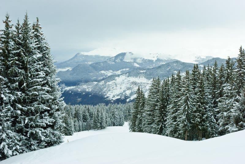 Sapins sur la montagne de l'hiver image stock