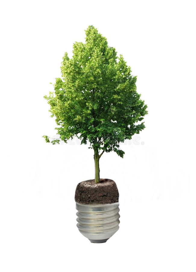 Sapling. Growing in thread of a from bulb sapling stock photography