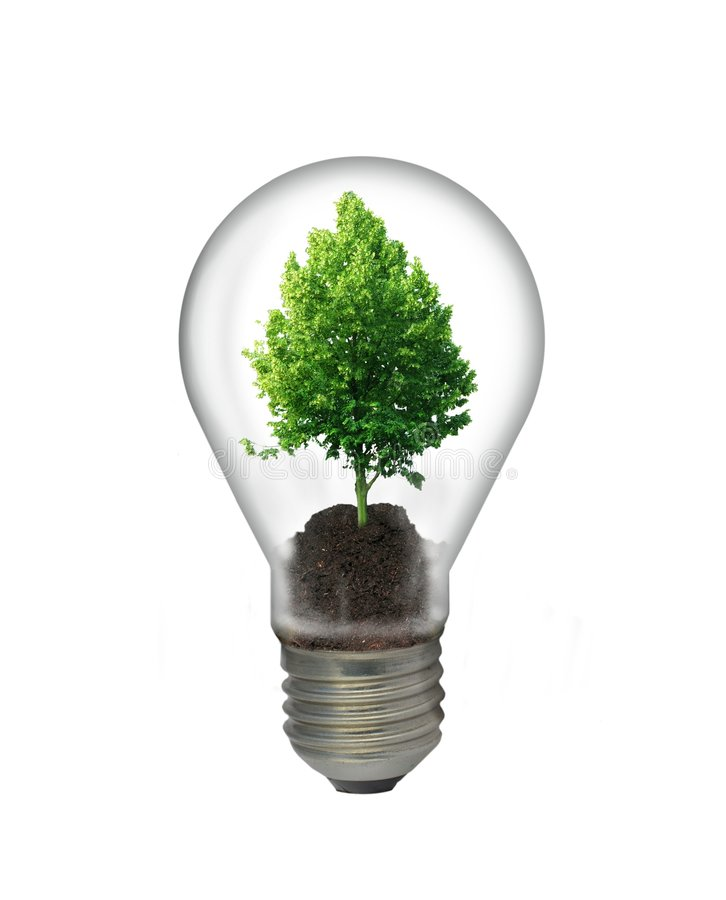 Sapling in bulb. On white background stock photos