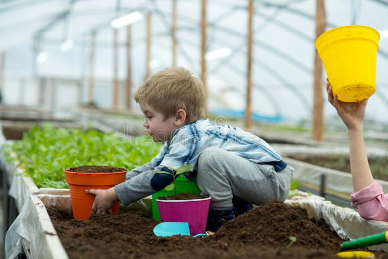 Sapling. child planting sapling in soil. growing sapling in greenhouse. small kid take care of sapling. proud of his royalty free stock image