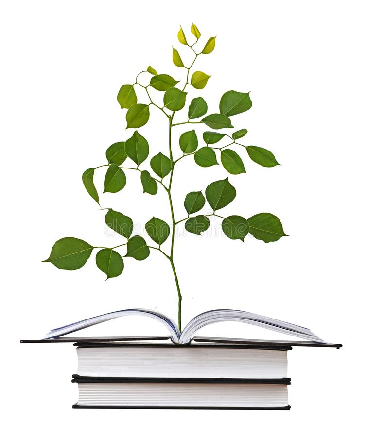 Sapling growing from book. Close up of Sapling growing from book royalty free stock image