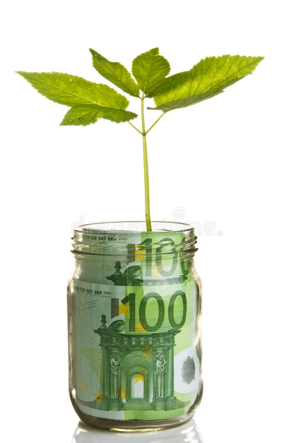 Sapling growing from euro bill royalty free stock photo