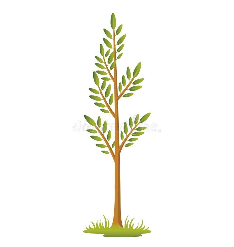 Download Sapling stock vector. Illustration of bark, green, grow - 30362375