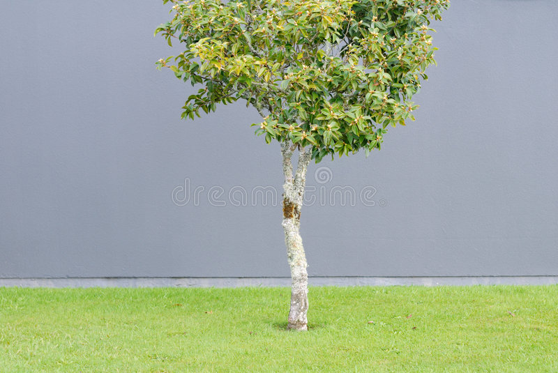 Sapling on the lawn stock photography