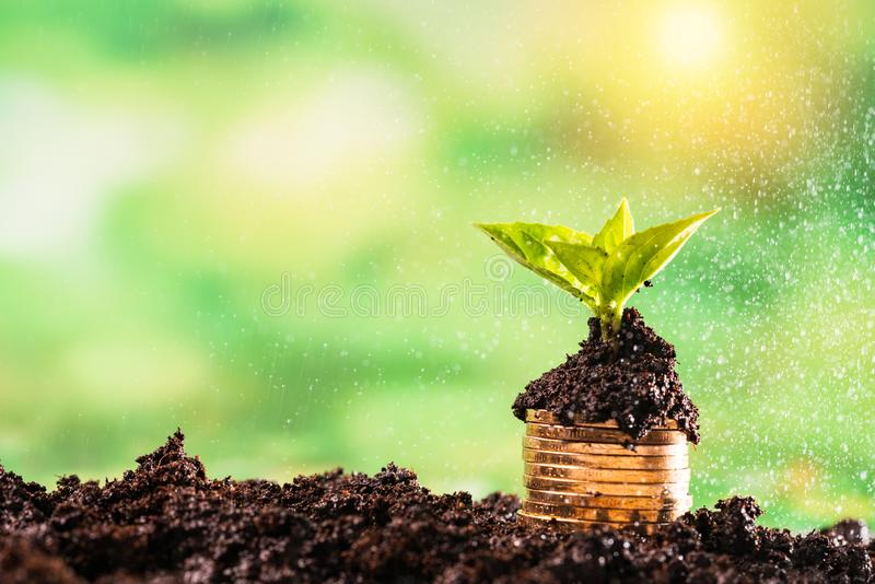 sapling and money coin on green background stock photo