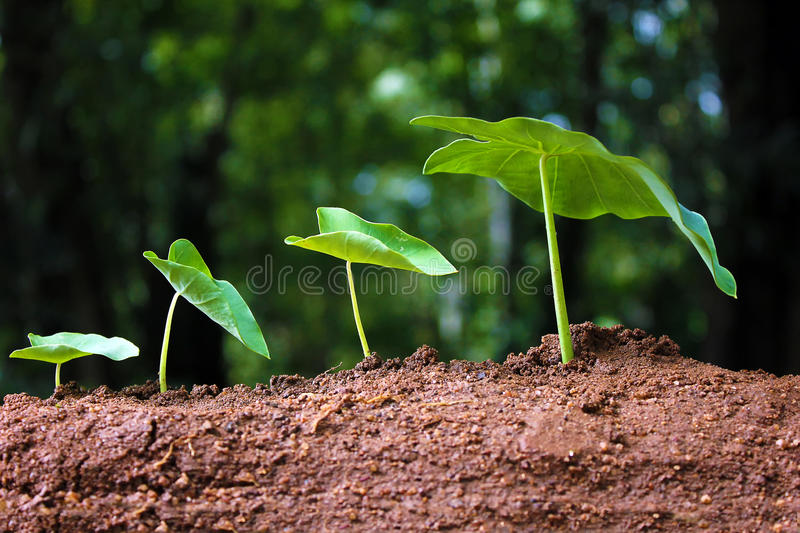 Saplings-new life. Plant growth-Baby plants-Progression of growing plants-New life stock photography