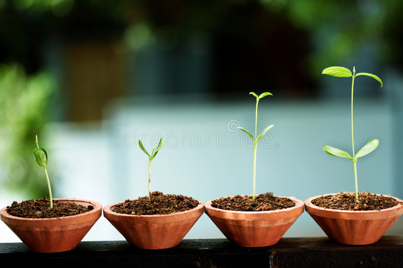 Saplings-New life stock images