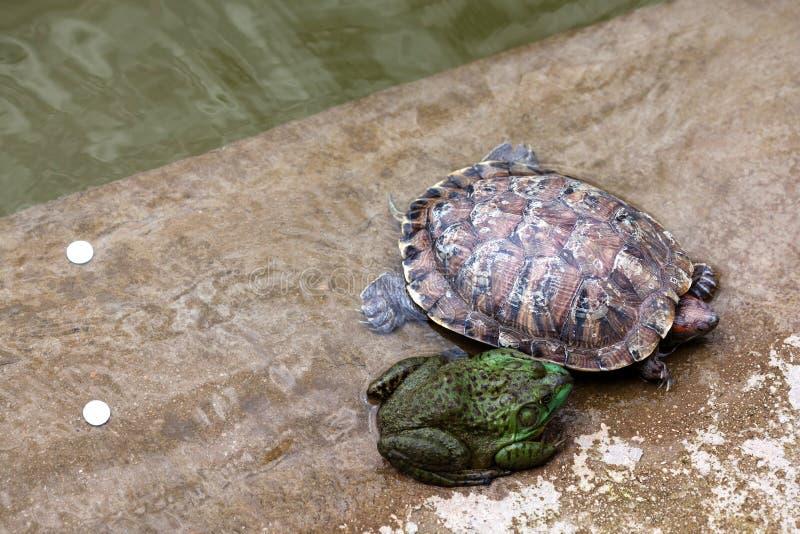 Sapo y tortuga imágenes de archivo libres de regalías