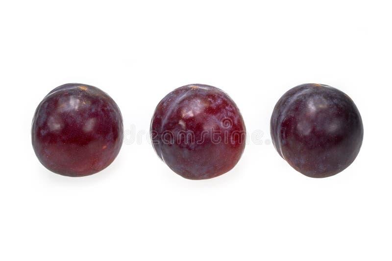 Sappig rood pruimfruit met één enkel hard zaad royalty-vrije stock foto's